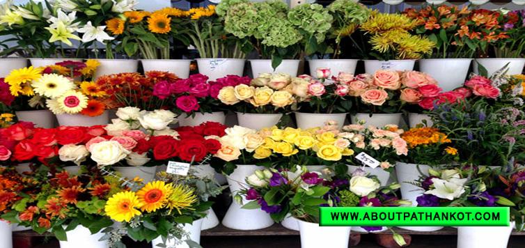 Armaan Flower Nursery