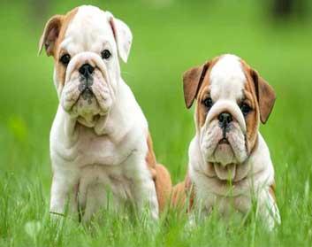 Bhardwaj Pet Shop