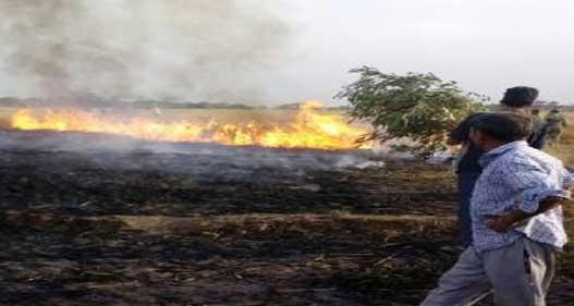 बिजली की तारों में स्पार्किंग 40 एकड़ गेहूं की फसल जली