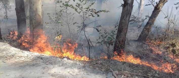 आग लगाने से 500 पेड़ जले