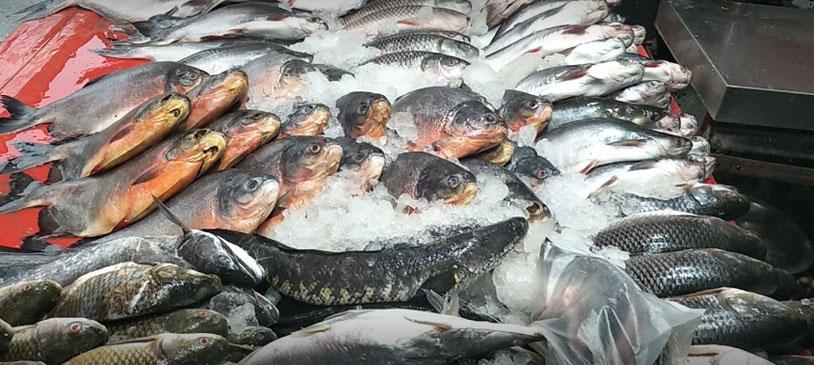B.K Fish Market