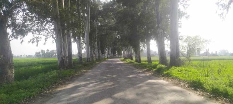 the-ax-will-run-on-500-trees